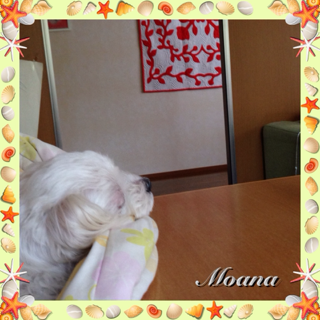 image-20140620193952.png